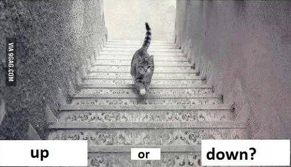 rencontre avec moi même aux quatre chats du monde
